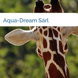 Bild Aqua-Dream Sàrl mittel