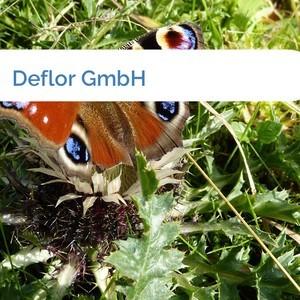 Bild Deflor GmbH mittel